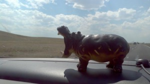 Hippo eating Wyoming